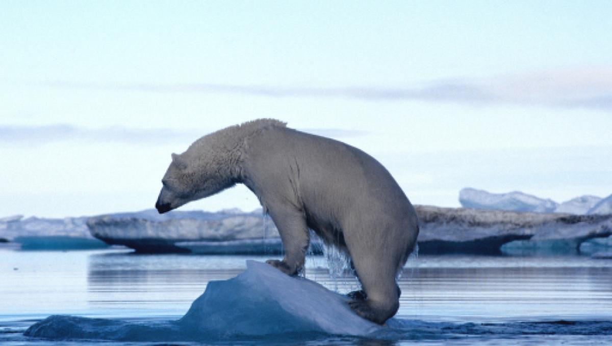 orso-polare-scioglimento-ghiacciai