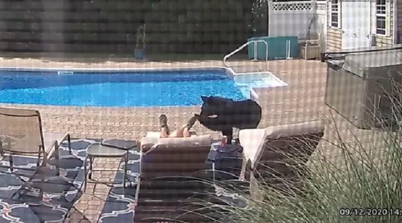 orso-in-piscina