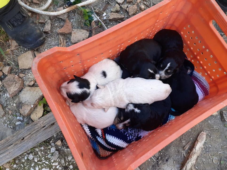 castelvetrano-otto-cuccioli-di-cane-salvati-oasi-ohana