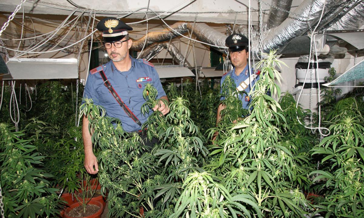 luigi-sartor-arrestato-casolare-marijuana