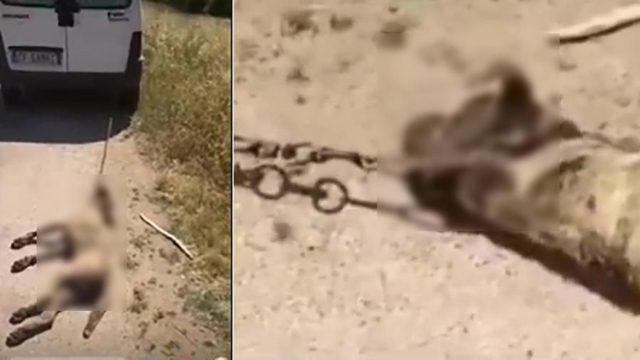 cane-ucciso-mazara-del-vallo