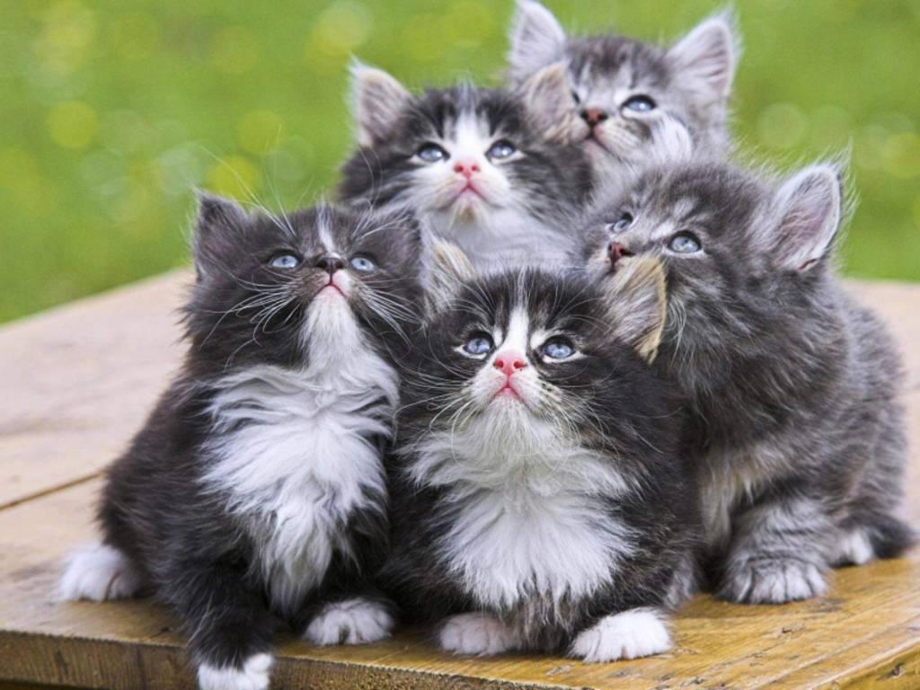 gatti-gattini