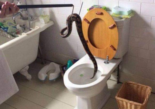 serpente-wc-uscito-gabinetto