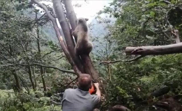 orso-trentino-incastrato