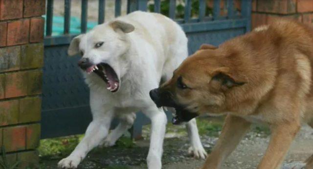 cani-feroci